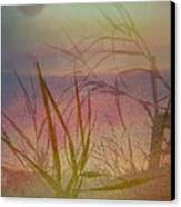 Windswept  Canvas Print by Shirley Sirois