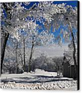 Winter Morning Canvas Print by Lois Bryan