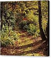 Woodland Path, Mount Stewart, Ards Canvas Print by The Irish Image Collection