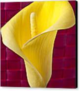 Yellow Calla Lily Red Mat Canvas Print by Garry Gay