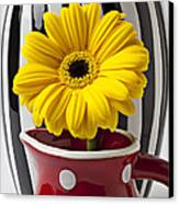 Yellow Mum In Pitcher  Canvas Print by Garry Gay