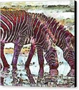 Zebras Canvas Print by George Rossidis