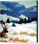 High Country Elk Canvas Print by Curt Peifley