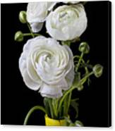 White Ranunculus In Yellow Vase Canvas Print by Garry Gay