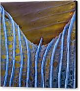 Butterfly Wing Scale Sem Canvas Print by Eye of Science