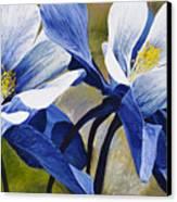 Colorado Columbines Canvas Print by Aaron Spong