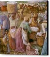 Cotton Fields Canvas Print by Pamela Mccabe