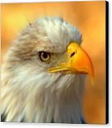 Eagle 10 Canvas Print by Marty Koch