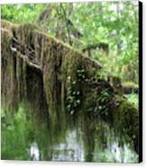 Hall Of Mosses - Hoh Rain Forest Olympic National Park Wa Usa Canvas Print by Christine Till