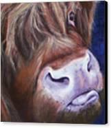 Highland Cow Canvas Print by Fiona Jack