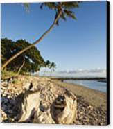 Palm And Driftwood Canvas Print by Ron Dahlquist - Printscapes