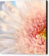 Pink Daisy  Canvas Print by Sandra Cunningham