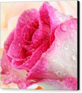 Pink Canvas Print by Mark Johnson