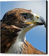 Red-tailed Hawk Canvas Print by Alan Lenk