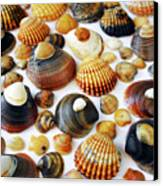 Shell Background Canvas Print by Carlos Caetano
