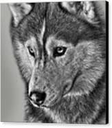 Siberian Husky 2 Canvas Print by Larry Linton