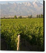 Vineyards In The Mendoza Valley Canvas Print by Michael S. Lewis