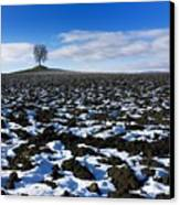 Winter Tree. Canvas Print by Bernard Jaubert