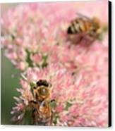 2 Bees Canvas Print by Angela Rath