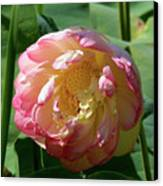 Lotus Blossom  Canvas Print by Crystal Garner