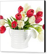 Red And White Tulips Canvas Print by Elena Elisseeva