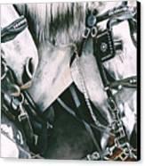 4 Grays Canvas Print by Nadi Spencer