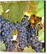 Red Grapes Canvas Print by Brandon Bourdages