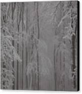 Winter Canvas Print by Gabriela Insuratelu