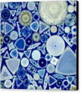 Diatoms Canvas Print by M. I. Walker