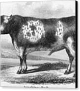 Cattle, 19th Century Canvas Print by Granger