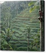 A Bahasa, Or Coconut Tree Climber Canvas Print by Justin Guariglia