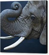 A Female African Elephant, Loxodonta Canvas Print by Joel Sartore