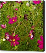 A Field Of Wild Flowers Growing Canvas Print by Todd Gipstein