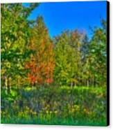 A Hint Off Fall Canvas Print by Robert Pearson
