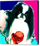 A Japanese Chin And His Toy Canvas Print by Kathleen Sepulveda