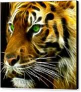 A Tiger's Stare Canvas Print by Ricky Barnard