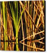 Abstract Reeds Triptych Top Canvas Print by Steven Sparks