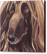 Afghan Hound Vignette Canvas Print by Anita Putman