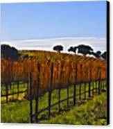 After The Harvest Canvas Print by Patricia Stalter