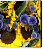 Allium And Sunflowers Canvas Print by Jane Rix
