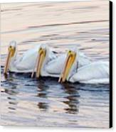 American White Pelicans Canvas Print by Bob Gibbons