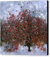 An Apple Of A Day Canvas Print by Julie Lueders