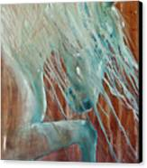 Andalusian Stallion Canvas Print by Jani Freimann