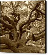 Angel Oak In Sepia Canvas Print by Suzanne Gaff