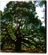 Angel Oak Tree 2004 Canvas Print by Louis Dallara