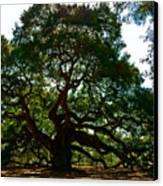 Angel Oak Tree 2004 Canvas Print by Louis Dallara