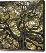 Angel Oak Tree Live Oak  Canvas Print by Dustin K Ryan