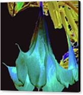 Angel's Trumpet Flower Canvas Print by Merton Allen