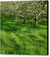 Apple Orchard Canvas Print by Sandra Cunningham