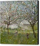 Apple Trees In Flower Canvas Print by Ernest Quost